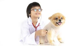 Isolated portrait of young female veterinarian checking up Pomeranian dog in veterinary clinic. Studio shot of girl and puppy on. Isolated portrait of young stock photography