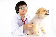Isolated portrait of young female veterinarian checking up Pomeranian dog in veterinary clinic. Studio shot of girl and puppy on. Isolated portrait of young royalty free stock images