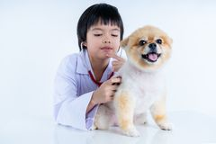 Isolated portrait of young female veterinarian checking up Pomeranian dog in veterinary clinic. Studio shot of girl and puppy on. Isolated portrait of young royalty free stock photo