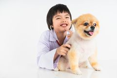 Isolated portrait of young female veterinarian checking up Pomeranian dog in veterinary clinic. Studio shot of girl and puppy on. White background royalty free stock photography