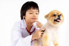 Isolated portrait of young female veterinarian checking up Pomeranian dog in veterinary clinic. Studio shot of girl and puppy. On white background royalty free stock photos