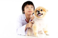 Isolated portrait of young female veterinarian checking up Pomeranian dog in veterinary clinic. Studio shot of girl and puppy on. White background royalty free stock photo