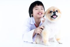 portrait of young female veterinarian checking up Pomeranian dog in veterinary clinic. Studio shot of girl and puppy on. Portrait of young female veterinarian royalty free stock image
