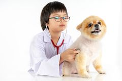 Isolated portrait of young female veterinarian checking up Pomeranian dog in veterinary clinic. Studio shot of girl and puppy on. Isolated portrait of young royalty free stock photography
