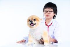 portrait of young female veterinarian checking up Pomeranian dog in veterinary clinic. Studio shot of girl and puppy on. Portrait of young female veterinarian stock photo