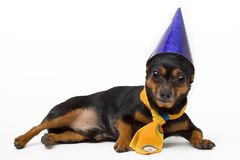 Isolated portret of funny dog Royalty Free Stock Images