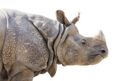 Isolated Profile Of A Rhinoceros Stock Photo