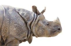 Isolated Profile of a Rhinoceros Stock Photo