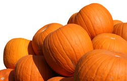 Isolated Pumpkins Stock Image