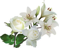 Isolated pure white rose and lily flowers bunch Stock Photography