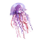 Isolated purple jellyfish watercolor illustration. Stock Photos