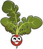 Isolated radish cartoon Stock Image