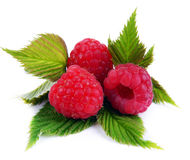 Isolated raspberries. Fresh raspberry with leaf i. Solated on white background Royalty Free Stock Image