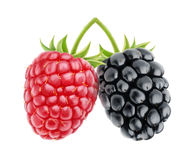 Isolated raspberry and blackberry Stock Photos