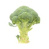Isolated raw green broccoli on white. Raw green broccoli isolated on white background Royalty Free Stock Photos