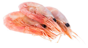 Isolated Raw Prawns Royalty Free Stock Images
