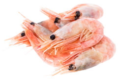 Isolated Raw Prawns Royalty Free Stock Photography