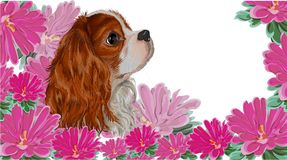 Spaniel dog realistic aster vector. Isolated realistically painted in vector dog breed cavalier king spaniel on asymmetric background of flowers pink asters, vet Royalty Free Stock Photo