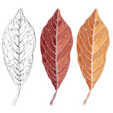 Isolated red autumn leaf. Vector illustration for your design. Stock Photography