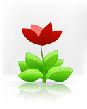Isolated red blossom tulip flower on white vector Stock Photo