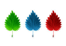 Isolated red blue & green leaves. Red blue and green leaves on white background Stock Photography