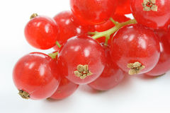 Isolated red currant Stock Images