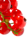 Isolated red currant Royalty Free Stock Images