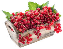 Isolated Red Currants Stock Photo