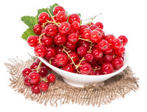 Isolated Red Currants Stock Image