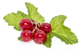 Isolated Red Currants Royalty Free Stock Images