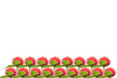 Isolated red flower.  strawberry fields. Red flowers in the sunrise. 