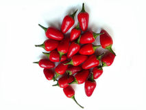 Isolated red hot chilli royalty free stock images