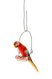 Isolated Red Parrot. An isolated red parrot model on a perch Stock Photos