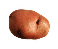 Isolated red potato Stock Photography