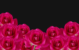 Isolated red rose flower on black background (with clipping path Royalty Free Stock Photography
