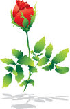 Isolated red rose with shadow. Vector Royalty Free Stock Photos