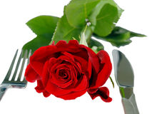Isolated red rose on the table Royalty Free Stock Photo