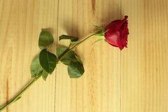 An isolated red rose Stock Photo