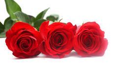 Isolated red roses Stock Photography