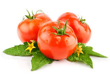 Isolated red tomato vegetable with green leaf Royalty Free Stock Photo