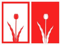 Red tulip flower vector and illustration. Isolated red tulip flower with framework,vector and illustration vector illustration