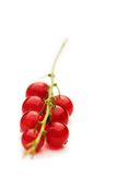 Isolated redcurrants, natures rubies... Royalty Free Stock Photography
