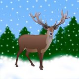 Isolated reindeer with antlers worth. illustration of a reindeer. Isolated reindeer with horns is a background of trees and snow Royalty Free Stock Photo