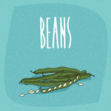 Isolated ripe vegetable pod fruits of pea or beans Royalty Free Stock Image
