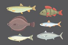 Isolated river fish. Set of freshwater sea cartoon fishes. Fauna ocean vector illustration. Isolated river fish. Set of freshwater sea cartoon fishes. Fauna Royalty Free Stock Photos