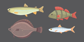Isolated river fish. Set of freshwater sea cartoon fishes. Fauna ocean vector illustration. Isolated river fish. Set of freshwater sea cartoon fishes. Fauna Royalty Free Stock Photo
