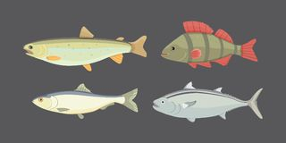 Isolated river fish. Set of freshwater sea cartoon fishes.. Fauna ocean illustration Royalty Free Stock Images