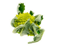 Isolated Romanesco Broccoli Stock Photography