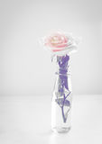 Isolated rose in bottle Stock Photo