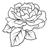 Isolated rose. Outline drawing. Stock vector illustration. Stock Photo